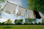 Inspiration at the washing line